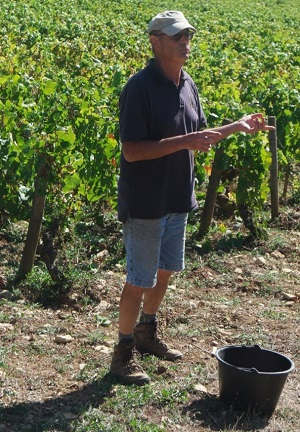 Stage vendanges bios en Bourgogne