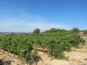 Location de vignes en France