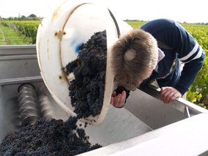 journ es vendanges 2012 bordeaux blog vin et gastronomie gourmet odyssey. Black Bedroom Furniture Sets. Home Design Ideas